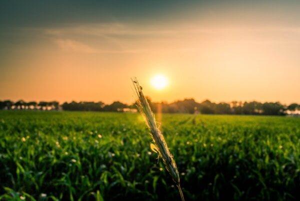 tikslusis ūkininkavimas